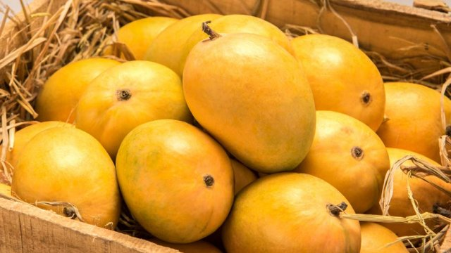 100,000 metric tons of Mangoes to be exported this season by Pakistan