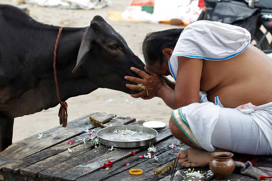 India is working on Cow Urine (Gomutra) to prepare Medicines